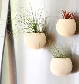 Oh, Hello Friend Magnetic Seed Pod Air Plant Holder - Oh, Hello Friend
