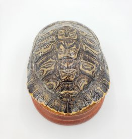Redux Box Turtle Shell