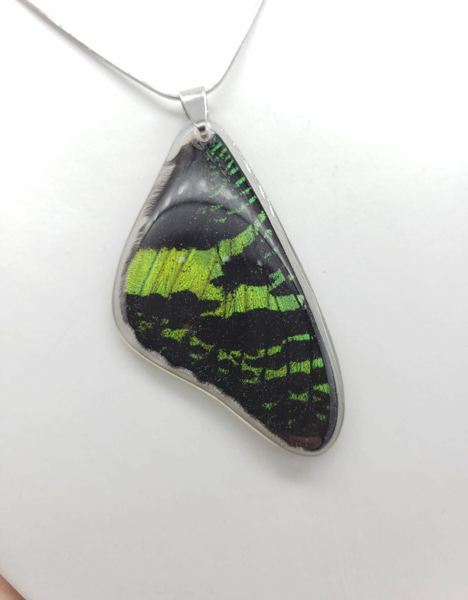 Asana Natural Arts Sunset Moth Top Wing Resin Coated Butterfly Necklace