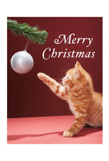 Christmas Kitty Boxed Holiday Notecards, By Martin Poole