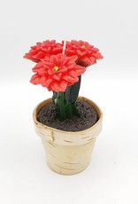 Poinsettia Candles in Birch Pot, Large