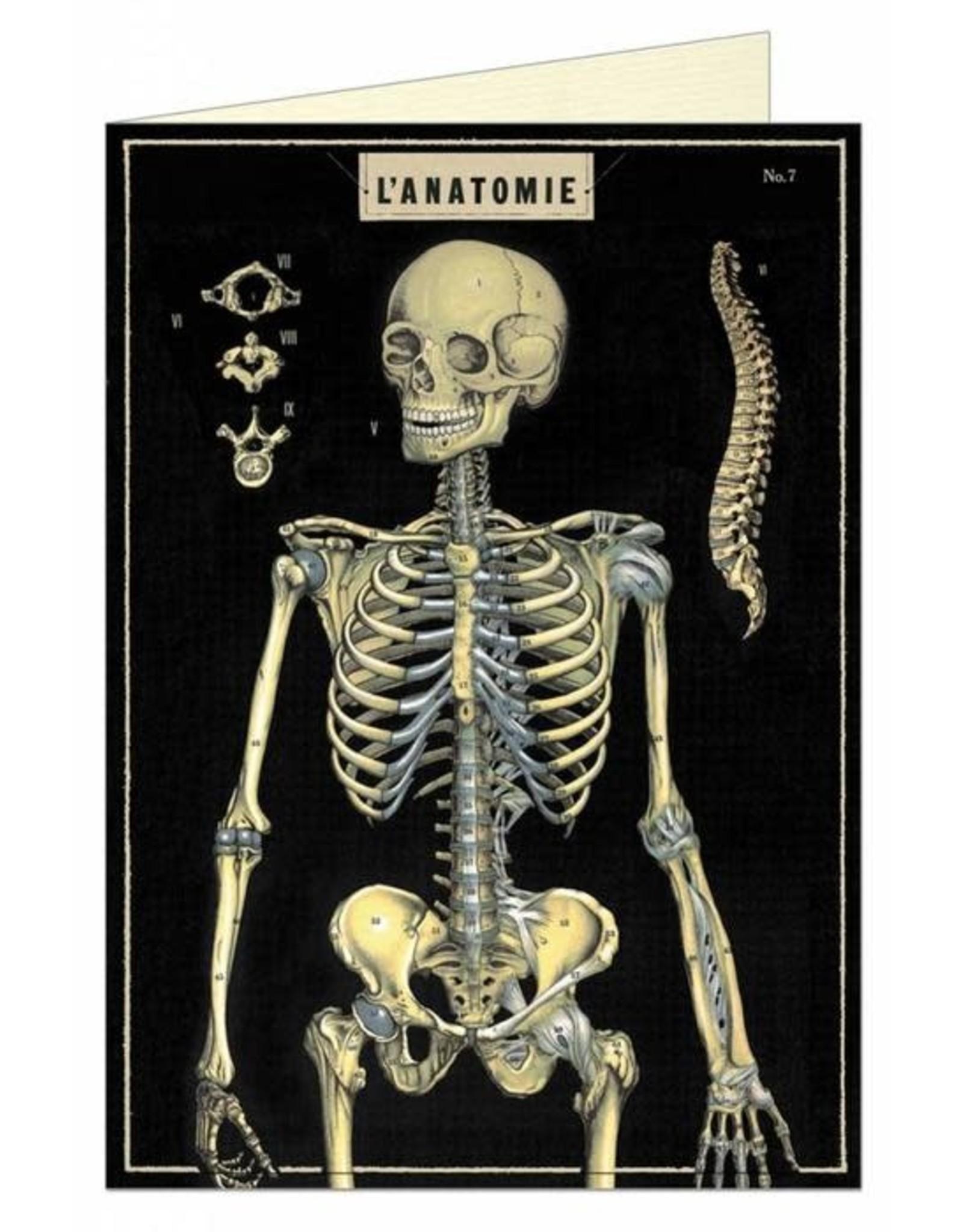 Cavallini Papers L' Anatomie Skeleton Greeting Card - Cavallini Papers