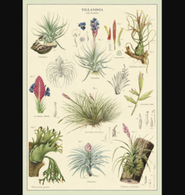 Cavallini Papers Tillandsia Greeting Card - Cavalini Papers
