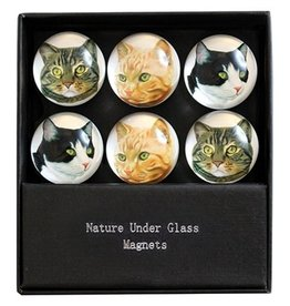 Cats Glass Magnet Set of 6