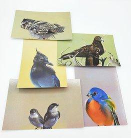 Mincing Mockingbird Bird Postcard Pack of 5 - The Mincing Mockingbird