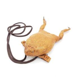 Cane Toad Purse Specimen