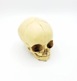 Resin Cast Skull by Jason Soles
