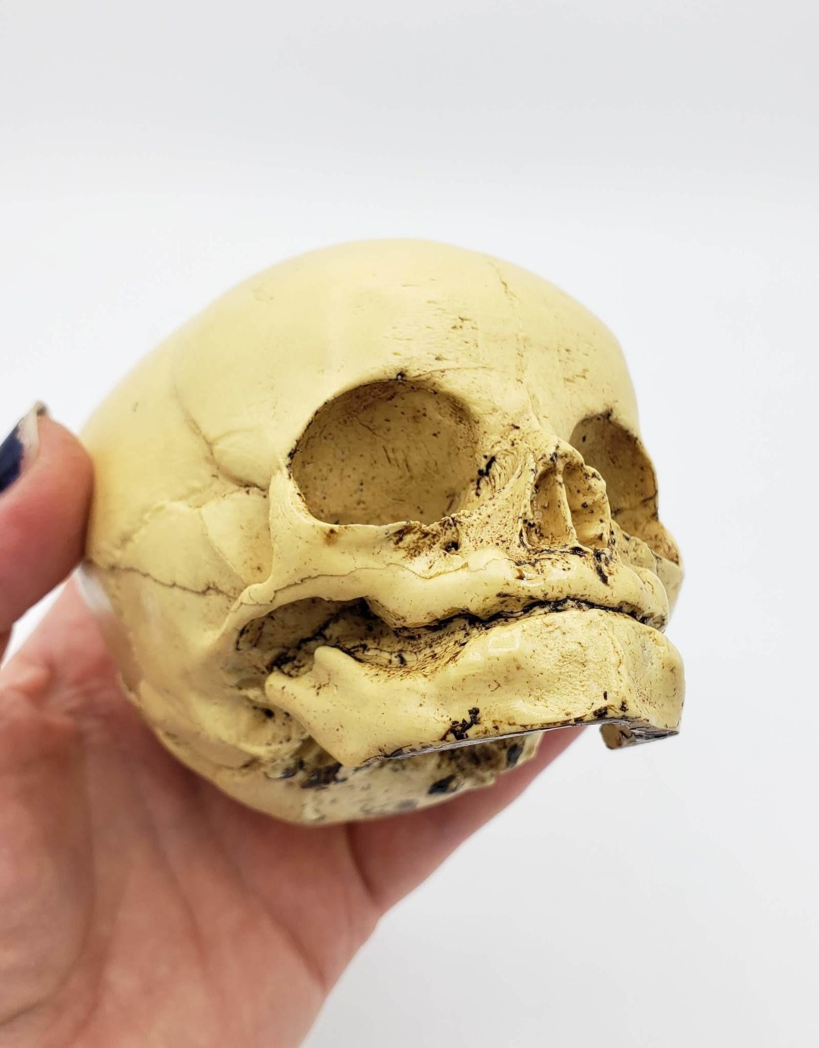 Resin Cast Skull by Jason Soles