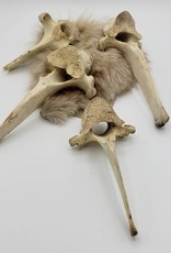 Redux Horse Vertebra Bone
