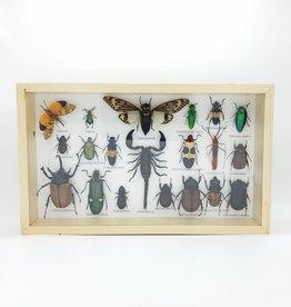 Bug & Beetle Specimens, Framed Large