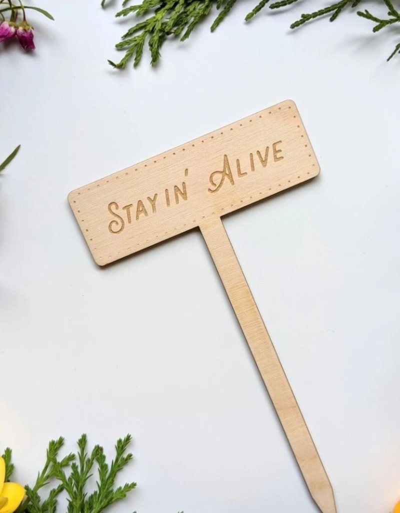 NORTH TO SOUTH DESIGNS STAYIN ALIVE PLANT   STAKE