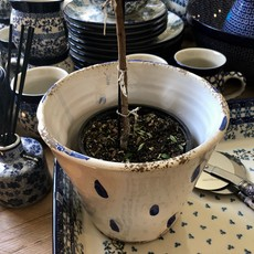 Cachepot - White with Blue Dots