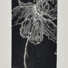 Janet Andre Block - Black/White 25x14