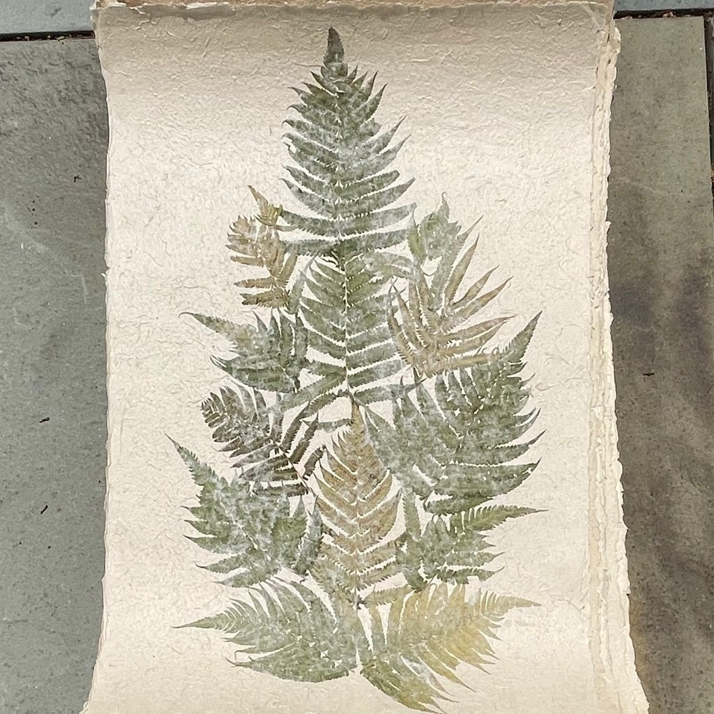 Flower Paper 24x35 - Fern