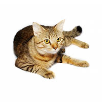General info on what you may require for your cat