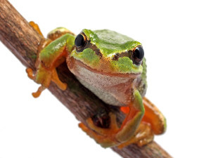 Basic reptile and amphibian info and supplies