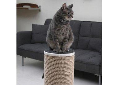 Cat Scratchers/Furniture