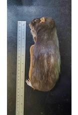 MSR Imporium Frozen Feeder Rats