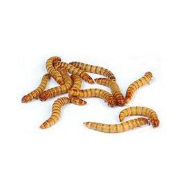Imporium Mealworm Giant per 100