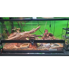 BEARDED DRAGON HYPO + SCAPED TANK