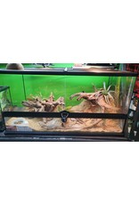 BEARDED DRAGON LEATHER BACK + SCAPED TANK