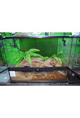 GHI + Scaped tank