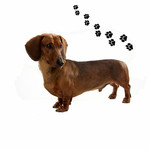 ANDREAS ANDREAS Dachshund Red Round Trivet