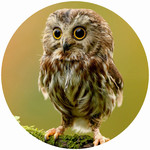 ANDREAS ANDREAS Custom Owl Round Trivet
