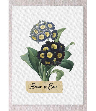 BEAR'S EAR CARD