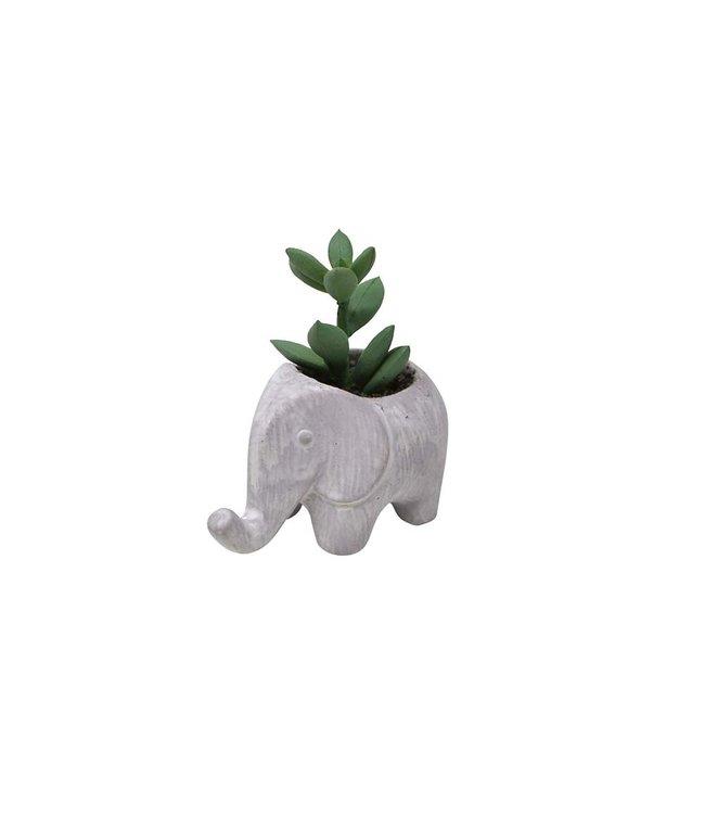 MINI ELEPHANT POT PLANT