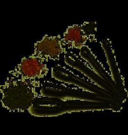 RSVP Endurance Spice Spoon Set Set of 6