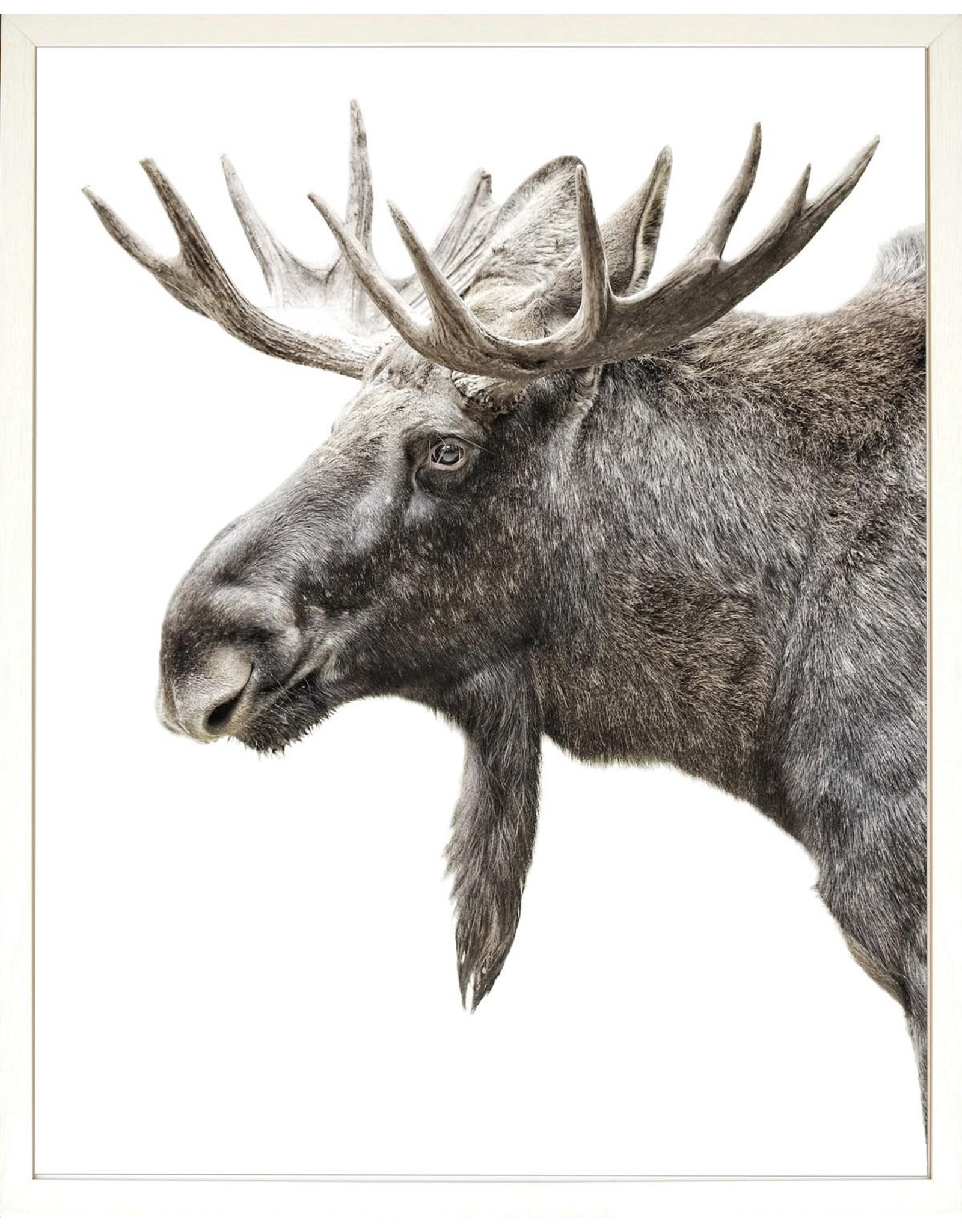 TCE Algonquin Moose