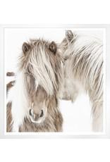 TCE Icelandic Ponies