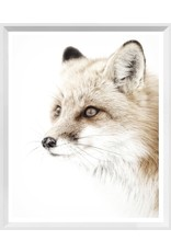 TCE Red Fox