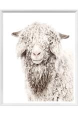 TCE Angora Goat