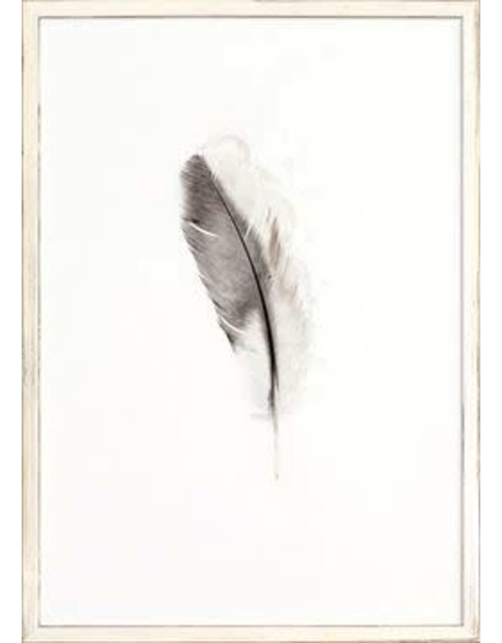 TCE One Feather