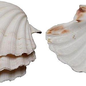 Harold Import Company Baking Shells/ Set of 4