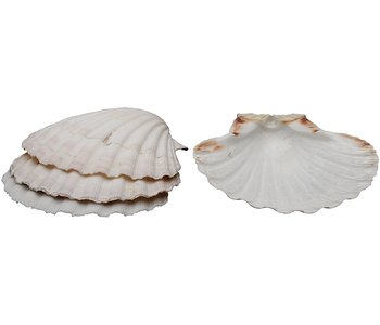 Baking Shells/ Set of 4