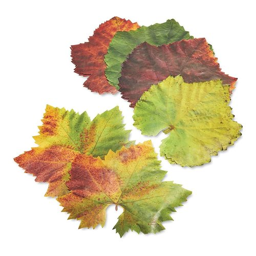 Harold Import Company Grape Parchment Leaves/ Set of 20