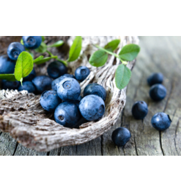 Liquid Gold Olive Oils & Vinegars Inc Liquid Gold, Wild Blueberry Dark Balsamic