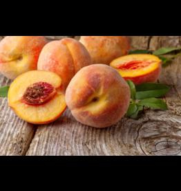 Liquid Gold Olive Oils & Vinegars Inc Liquid Gold, Apricot White Balsamic, 200ml