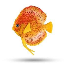 AquaTop AQUATOP Discus Fish