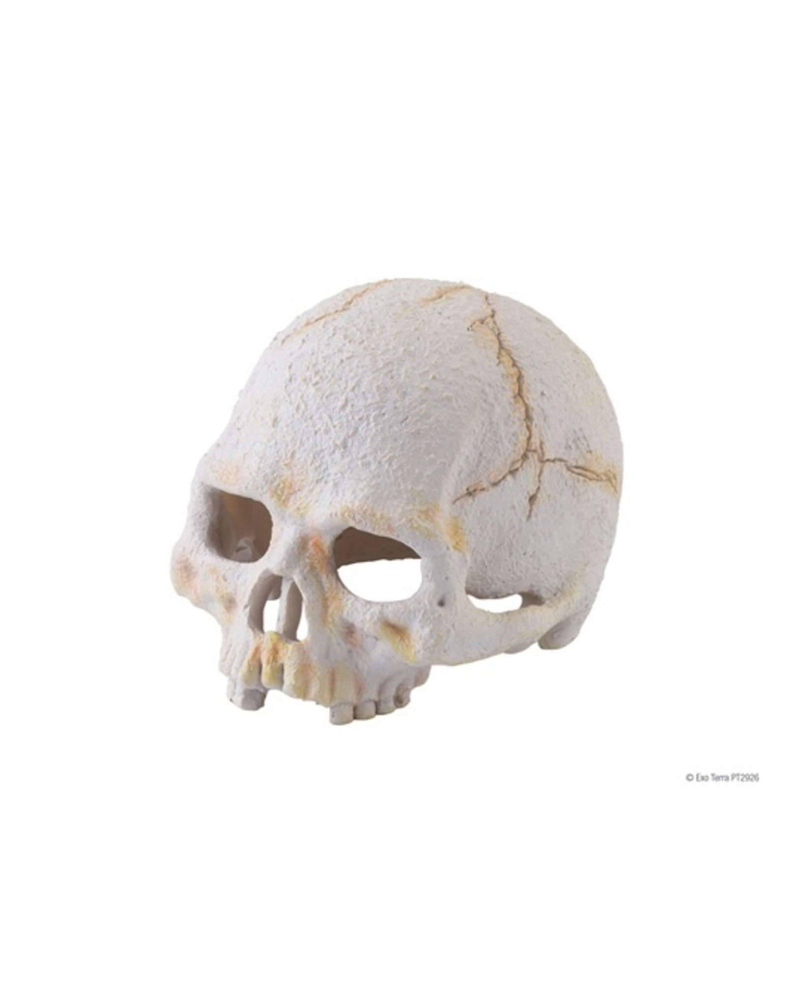 Exo Terra EXO TERRA Terrarium Decor Primate Skull
