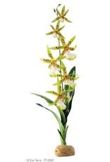 Exo Terra EXO TERRA Spider Orchid