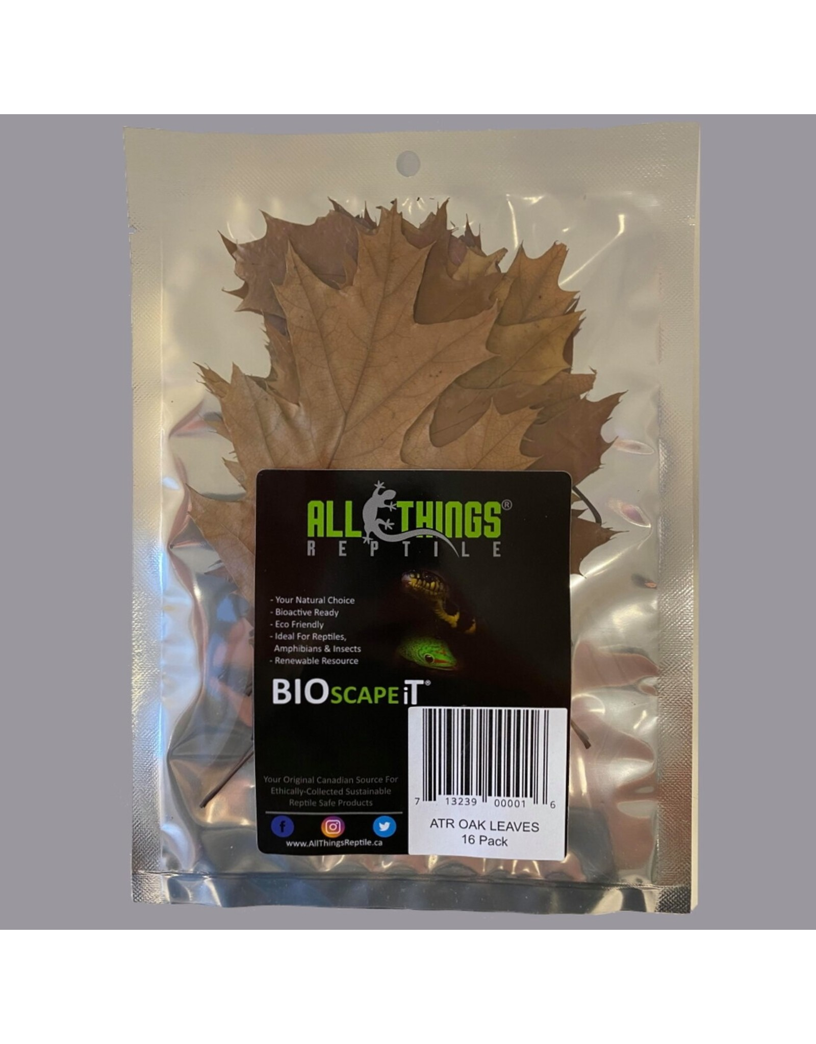 All Things Reptiles ALL THINGS REPTILE Oak Leaf Litter