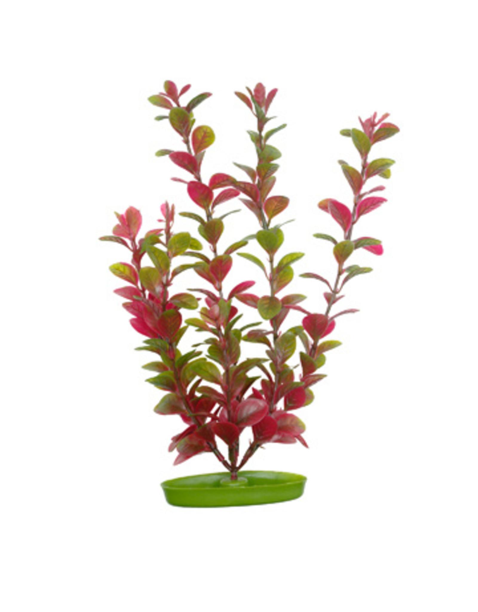 Marina MARINA AquaScaper Plants Red Ludwigia