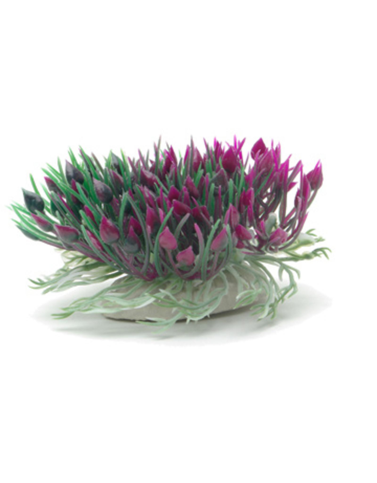 Marina MARINA Betta Ornament Purple Hearts Shrub