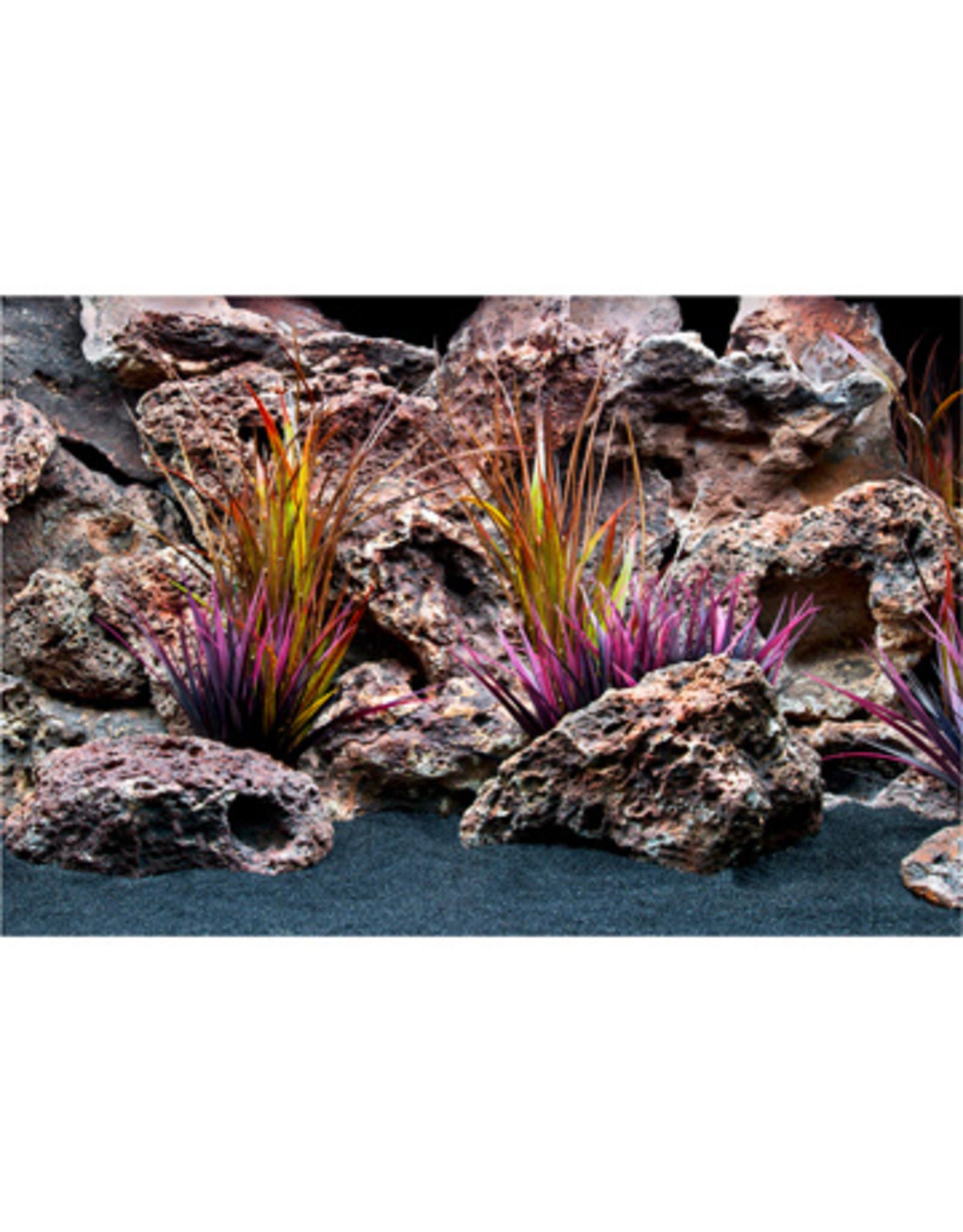 """Marina MARINA Pre-Cut Background -12""""x24"""",Jungle Flora/Red Lace"""