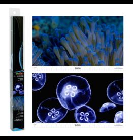 Tetra TETRA Glofish Reversible Backgrounds Jellyfish/Sea Anemone 10 Gal