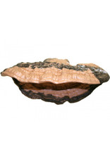 Magnaturals MAGNATURALS Mushroom Ledge